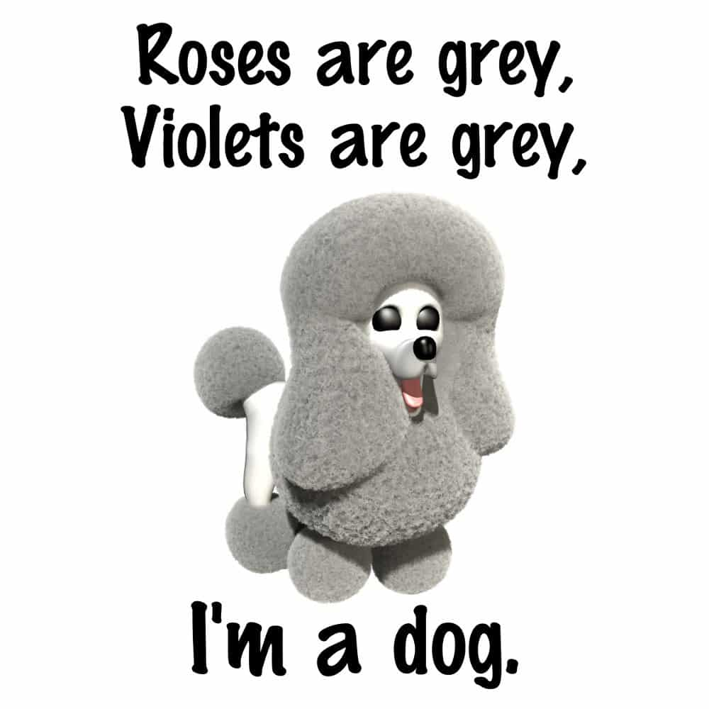 Roses Are Grey