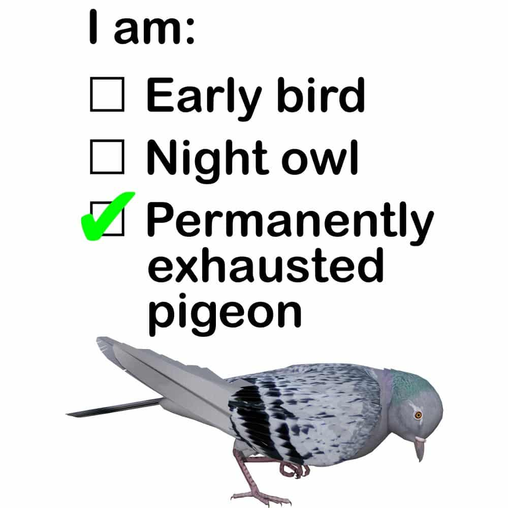 Permanently Exhausted Pigeon